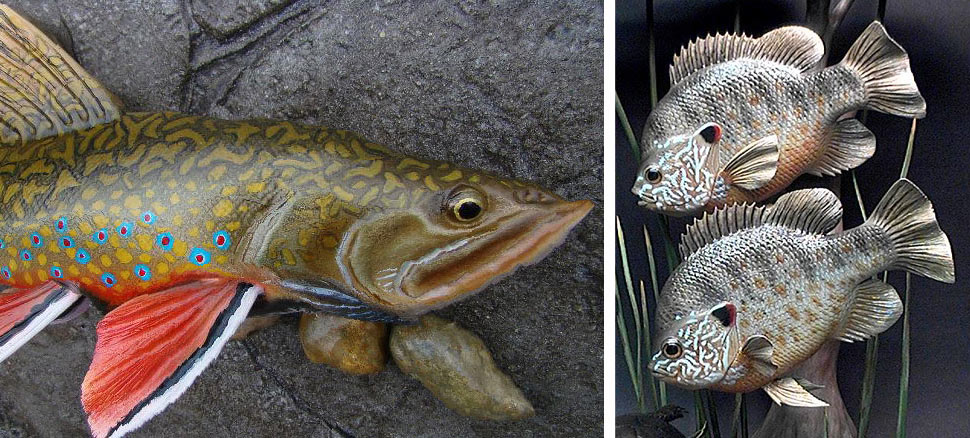 Fish carving forum bing images
